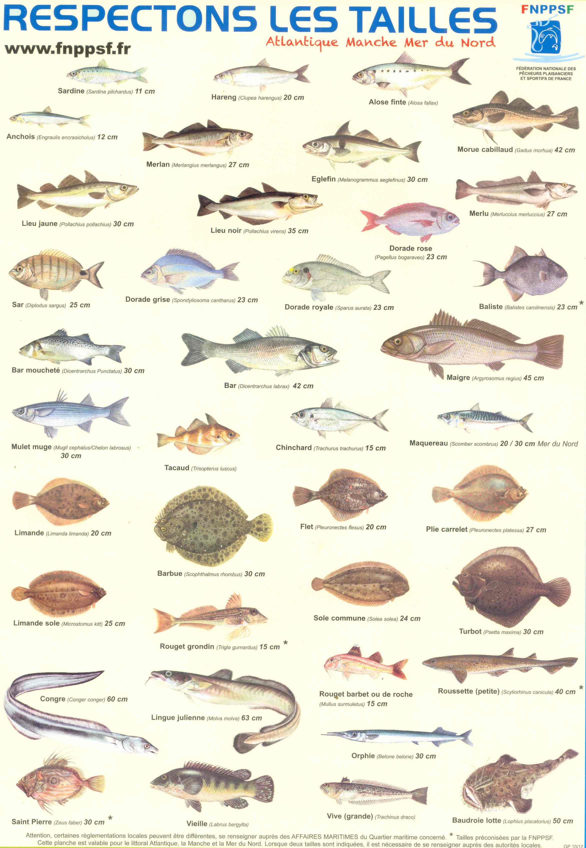 taille-poisson1-2016